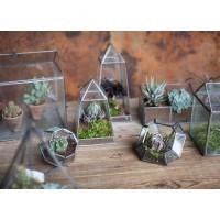 Terrarium et plantes